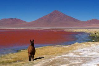 Chili Altiplano andino, désert des Andes