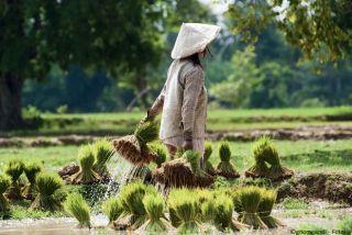 Laos Mékong et minorités