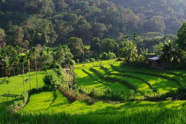 Sri Lanka Sri Lanka, un goût de Paradis