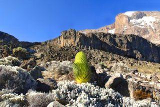 Tanzanie Ascension du Kilimandjaro, voie Machamé
