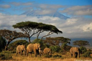 Tanzanie Safari dans les grands parcs