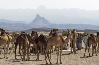 Tchad © Philippe Freund