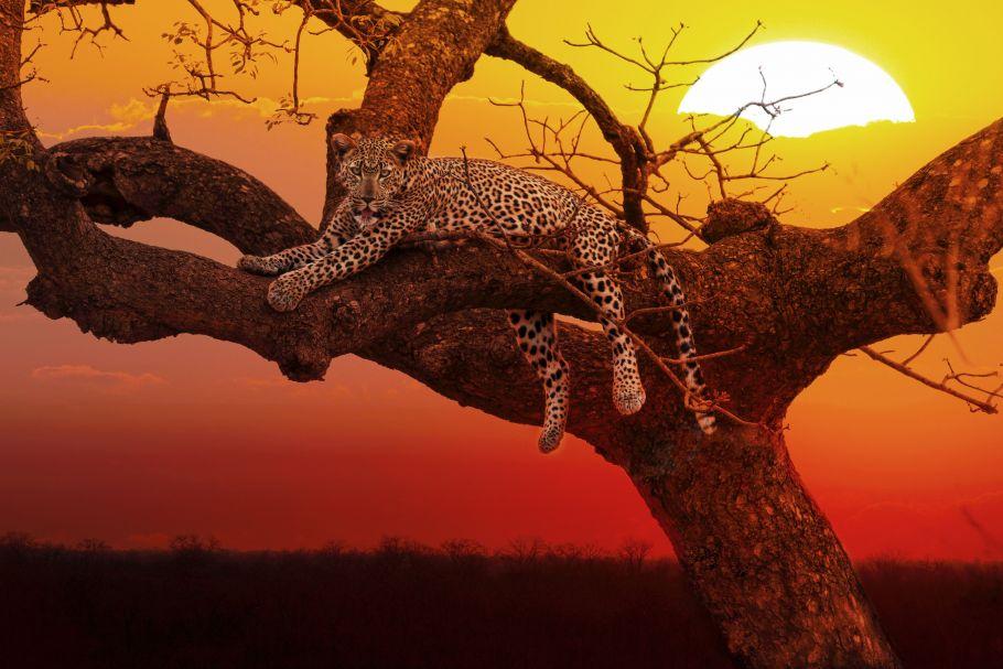 [KEY_MAP] - AFRIQUE DU SUD - Kaléidoscope sud-africain