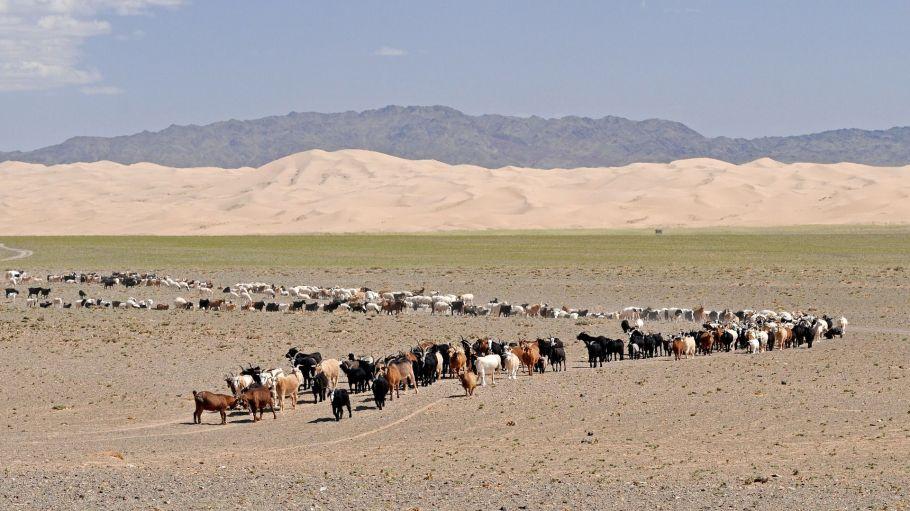 [KEY_MAP] - Mongolie - Découverte de la Mongolie centrale et des richesses du Gobi