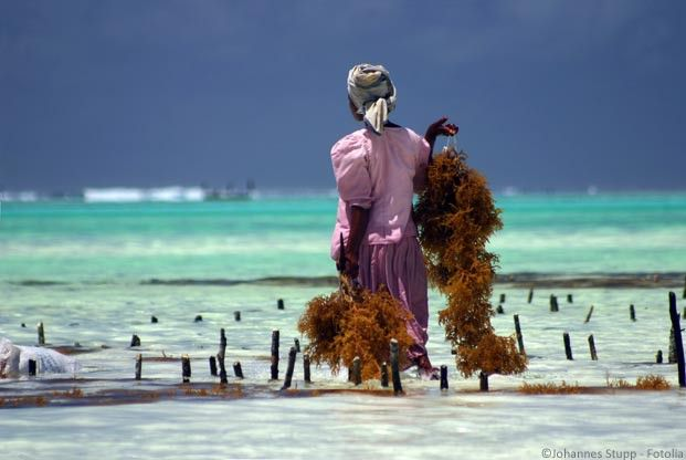 Tanzanie Zanzibar Extension Quot S 233 Jour 224 Zanzibar 233 Pices
